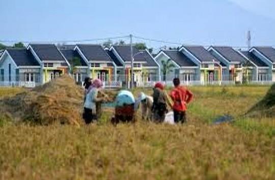Dampak Perumahan, 800 Hektar Lahan Pertanian di Siantar Beralih Fungsi